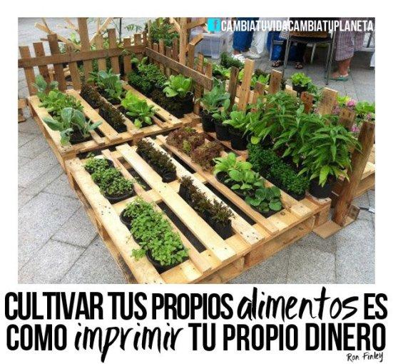 cultivar tus propios alimentos es como imprimir tu propio dinero