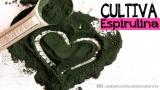 ESPIRULINA: el super-alimento que puedes cultivar encasa