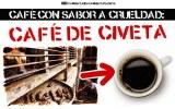 KOPI LUWAK O CAFEÍNA CRUEL: el inhumano proceso de obtención del café deciveta
