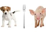 Por qué queremos a los perros pero nos comemos a loscerdos